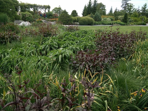 Meadow gardening info black birch landscape design a stylized meadow at coastal maine botanical gardens this planting remains interesting despite not being workwithnaturefo