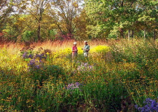 Meadow gardening info black birch landscape design the meadow at mt cuba center workwithnaturefo