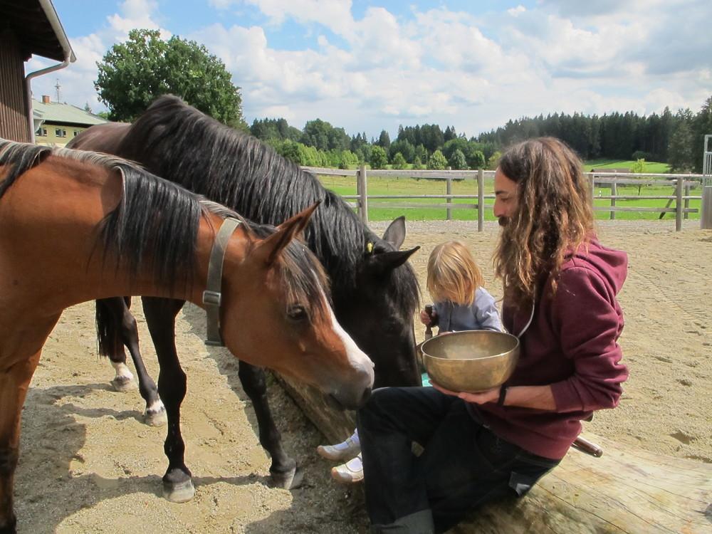 Bavarian Horses.JPG