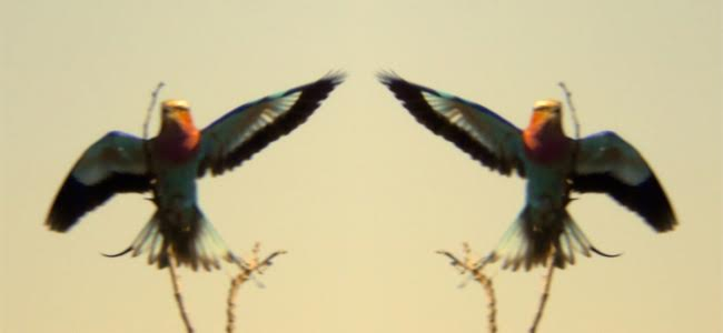 Plastic Birds