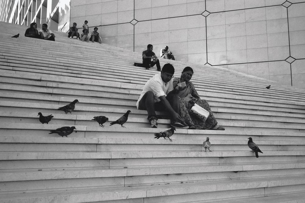 Bird Feeding at the Grand Arche, La Défanse, Paris (2012)