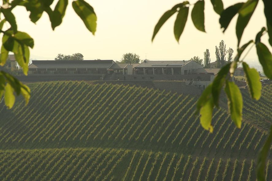 vineyards 01.jpg