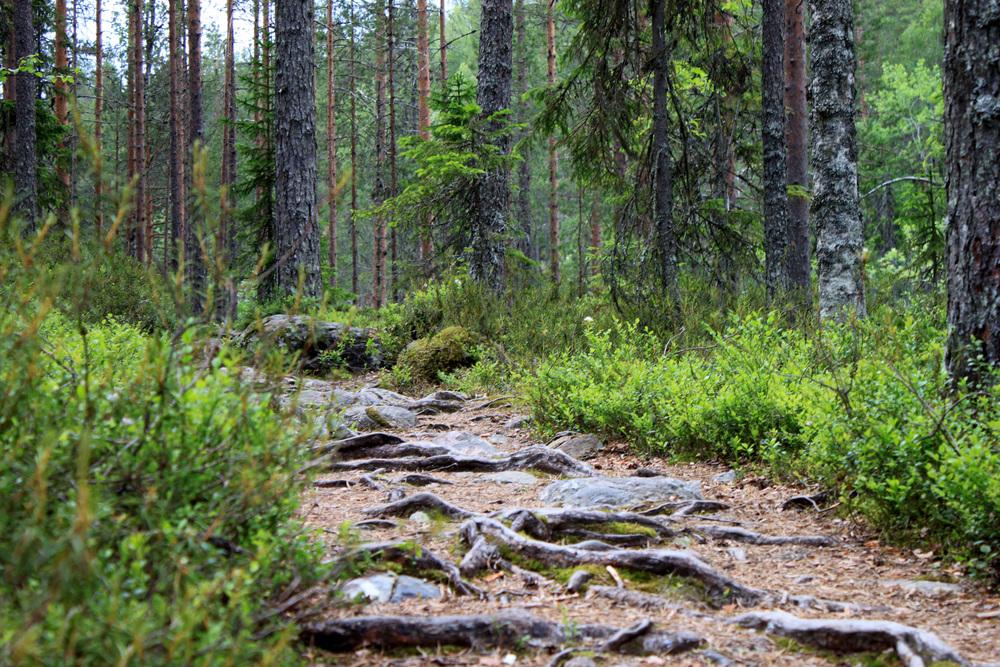 Hiidenportin kansallispuisto.