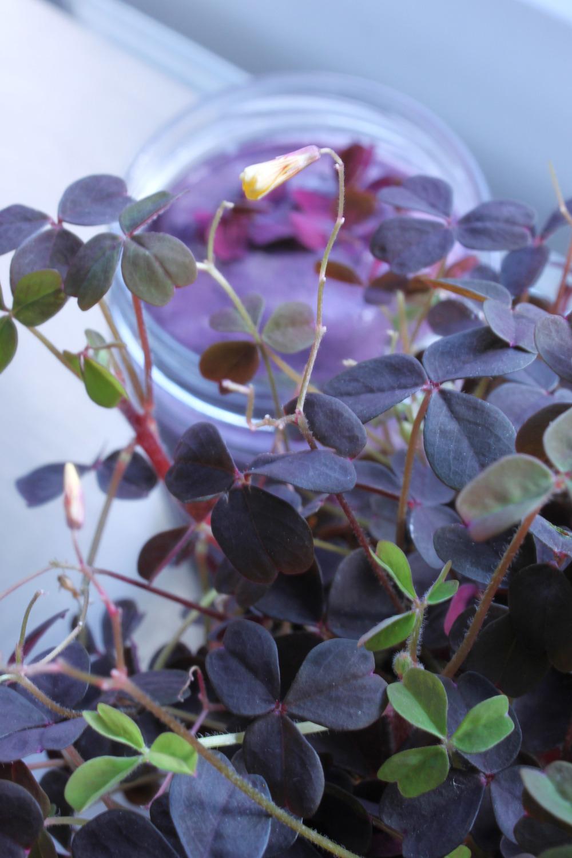 blueberrysmoothie.jpg