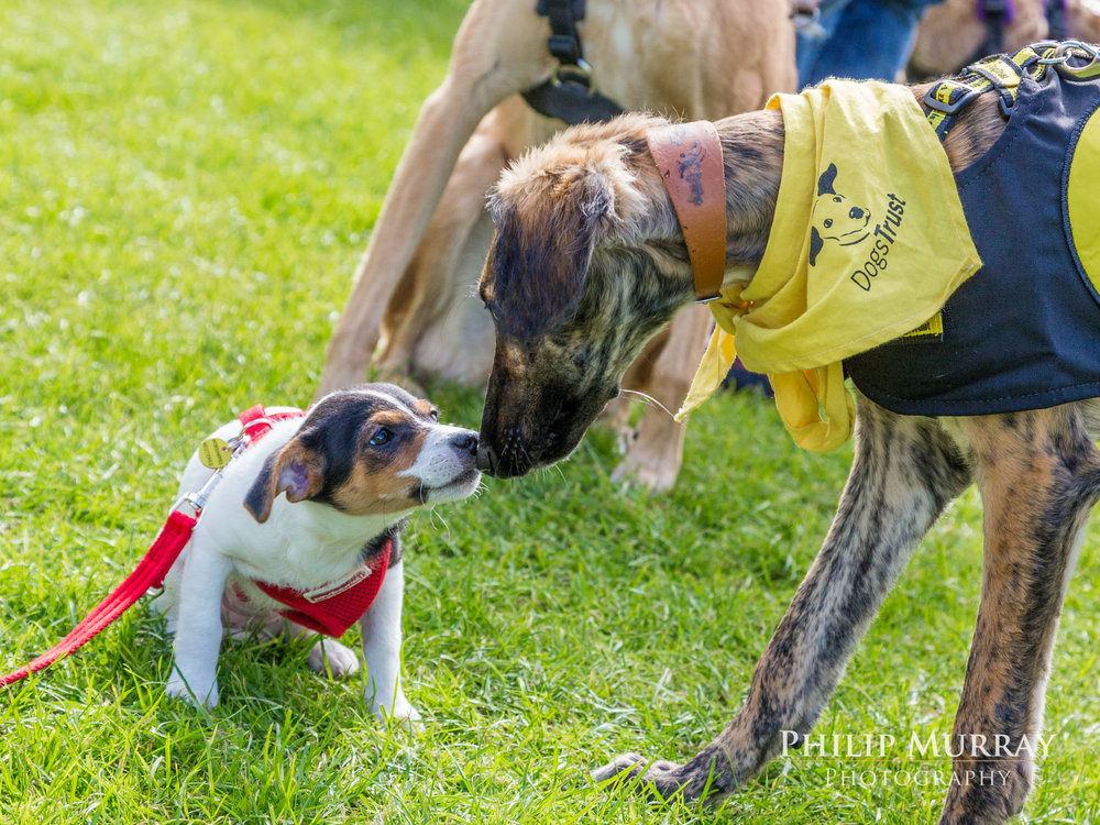 PHILIP MURRAY at THE DOGGIE DO with DOGS TRUST 2017  After years of working in various photographic studios across Dublin, Philip decided to set up  Philip Murray Photography  in 2013. As dogs are his other passion in life what better way to get the best of both worlds than to photograph them! Growing up with dogs his whole life and the proud owner of two dogs, Charlie (Jack Russell) and Zero (Pointer), Philip can't even walk past a dog without stopping to meet them. Join the club!   Click on the image above to see more gorgeous Doggie Do shots from Philip.   086 408 6207   info@philipmurrayphotography.com    www.philipmurrayphotography.com