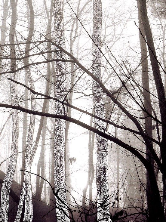 tira tree scratched.jpg