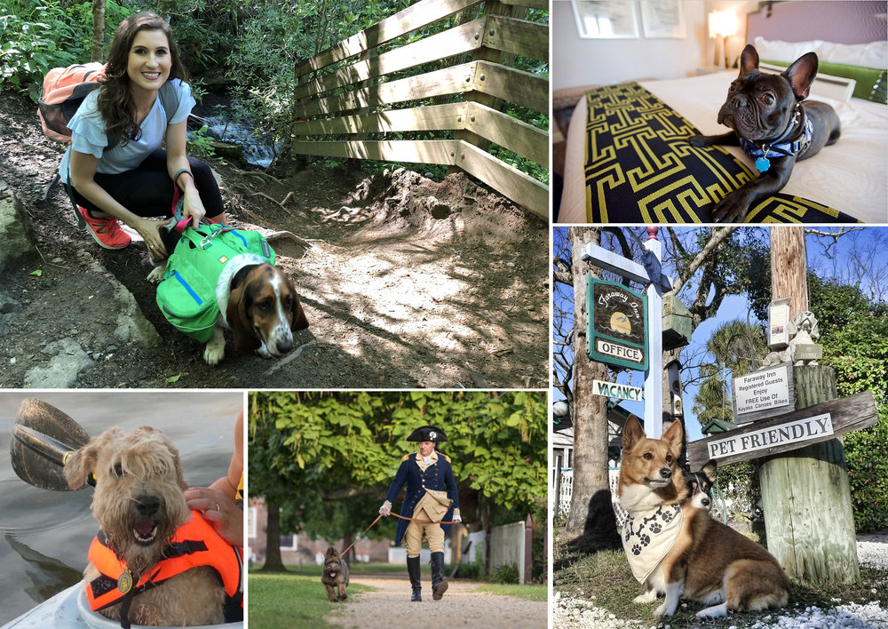 Pet Friendly pet travel in United States US.jpg