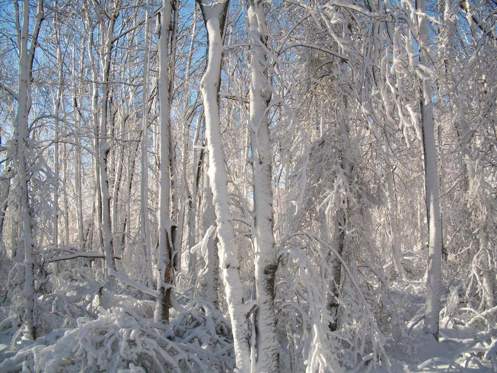 There's a certain dreariness to a winter without snow. There's no blanket of white, no promise of renewal, no beauty blotting out the stark trees and opalescent skies.   There's also no snowshoeing.   I'd really like some snow upstate, though. It would kind of kickstart away the winter blahs.