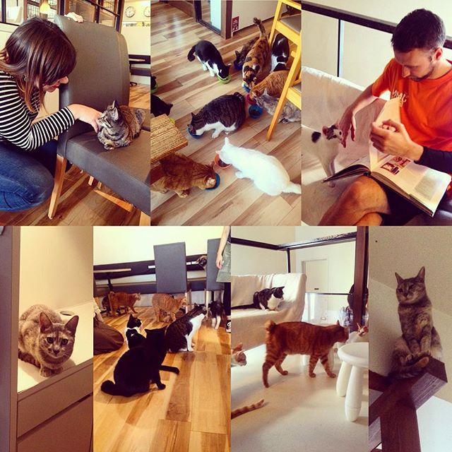 Keurig Cat Cafe