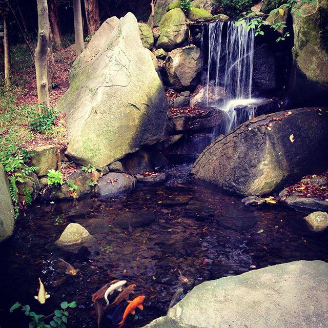 Koi in Yusentei garden