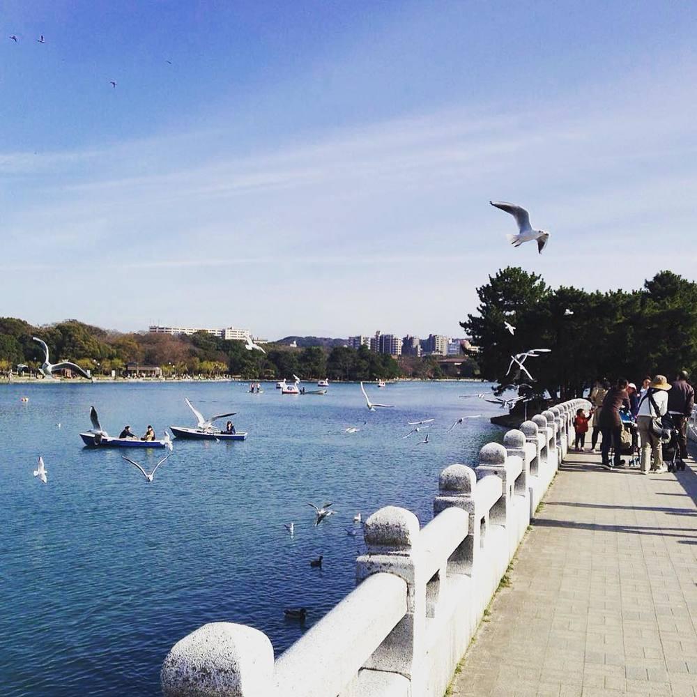 Summer in Ohori park