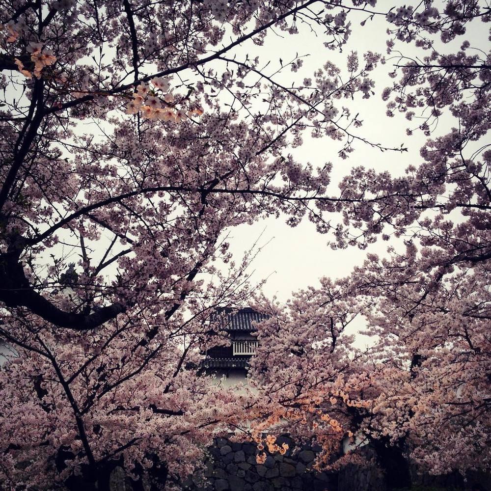 Castle hiding amongst the blossom