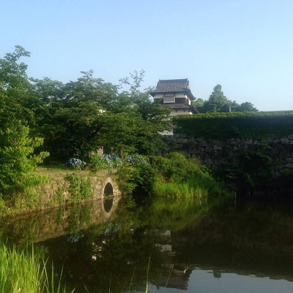 Nature takes over Fukuoka Castle