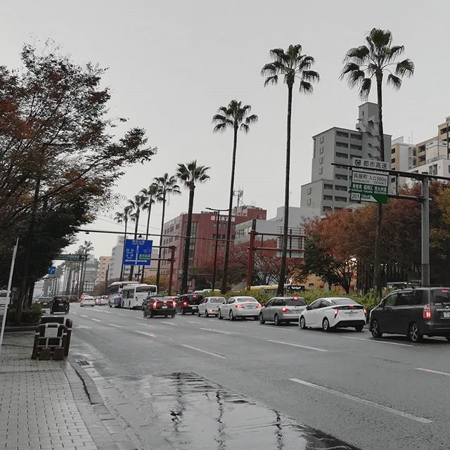 Sad palm trees...🌴💦 #wheresthesun #greyday #fukuokacity
