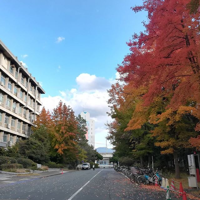 Can we talk about these trees?! 😱🍁🍂🌿 #nofilter #coloursofnature #autumnleaves