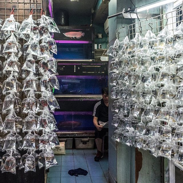 A shop in Hong Kong's famous goldfish market. All types of pet fish are available here, including rare marine species. #hongkong #mongkok #fishmarket