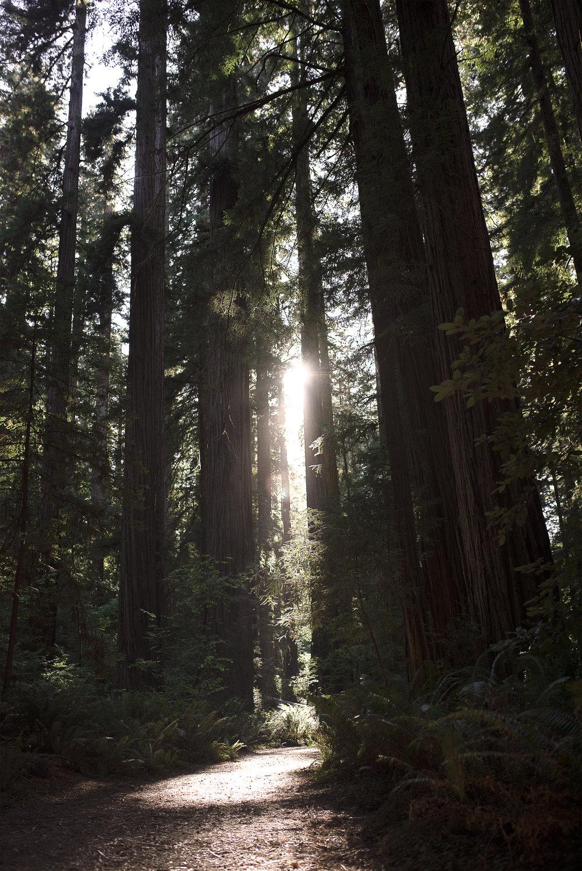 treesor.jpg