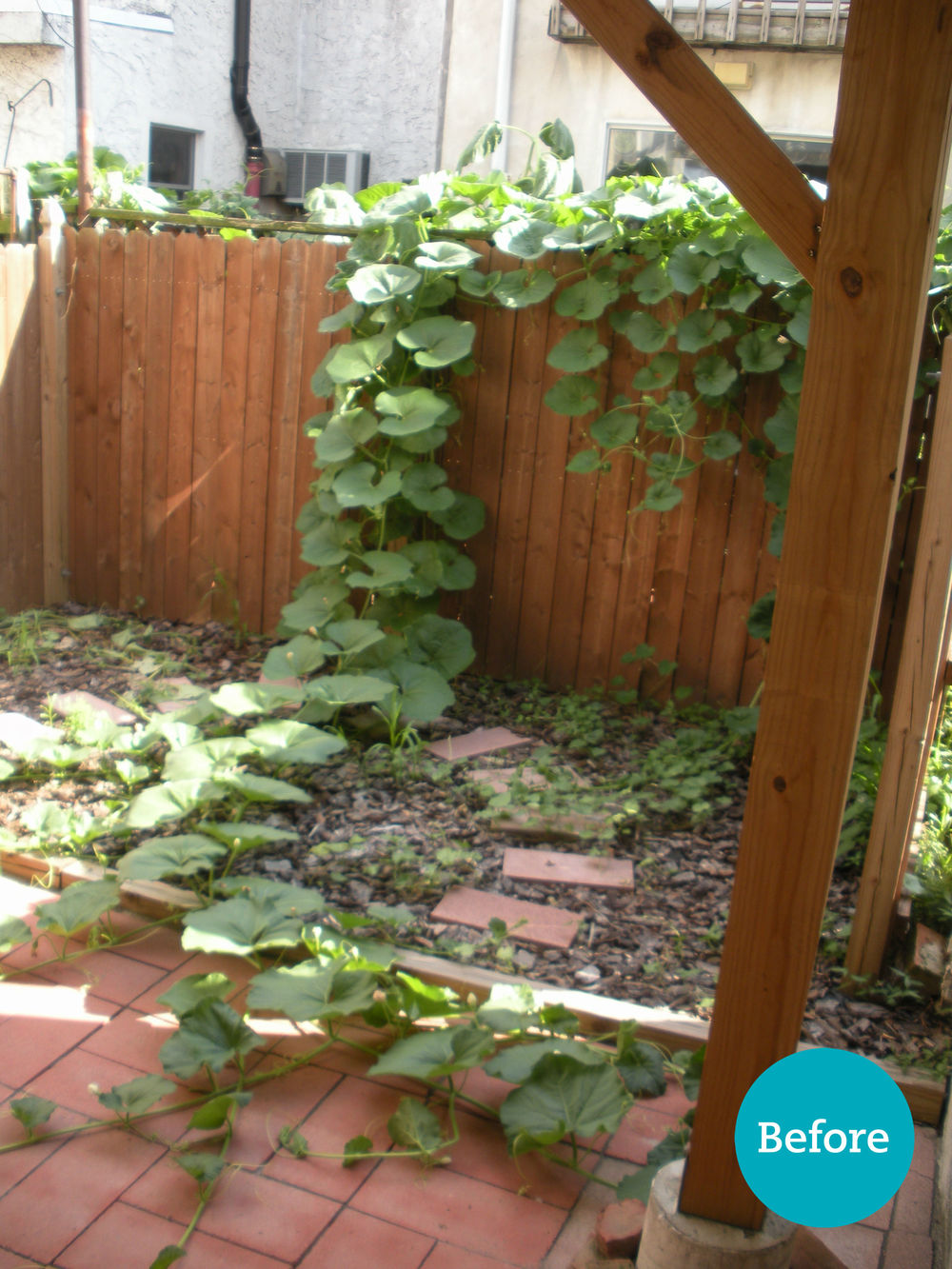 Outdoor terrace with no seating, and neighbor's overgrown plant has taken over!