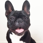 @ninjathedog 714,500 Followers
