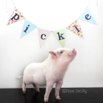 @pickle.the.pig 64,646 Following