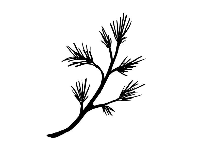 BW-Pine-.jpg