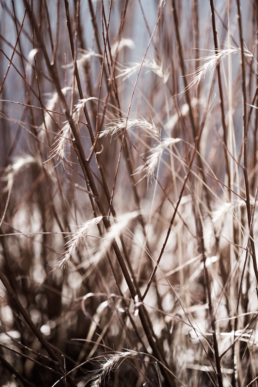 wheat-7954.jpg