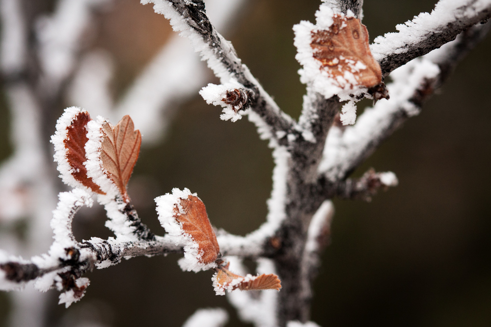 icecrystalsonmountainmohagany-9375.jpg