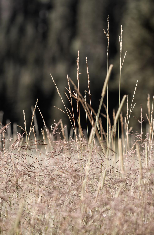 wheat-048.jpg