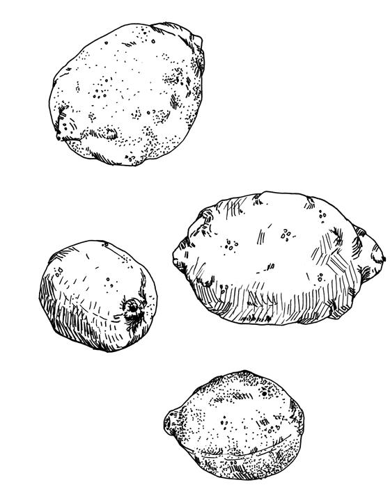 drawing021.jpg
