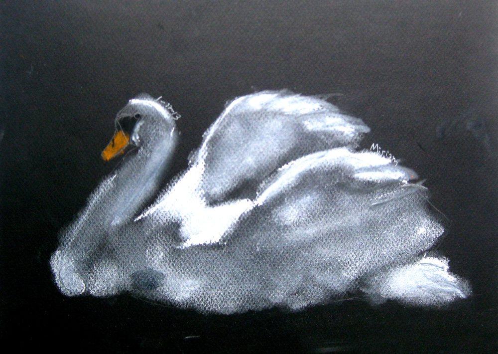 swan_age9.jpg