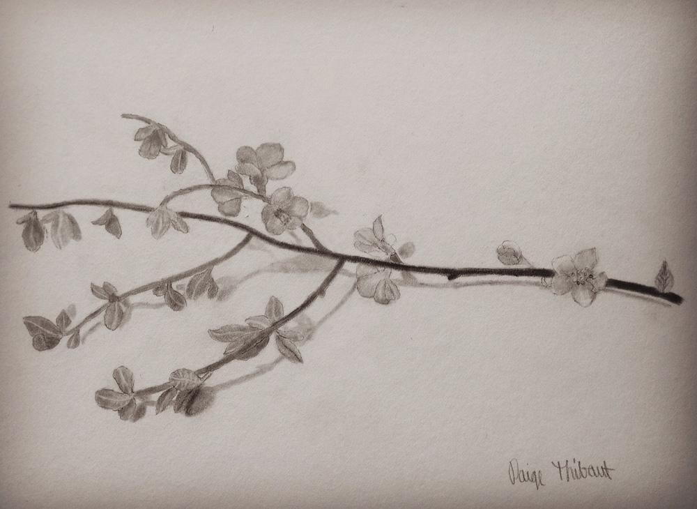 graphite~ age 15