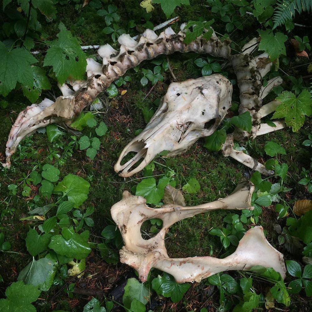 elk_bones.jpg