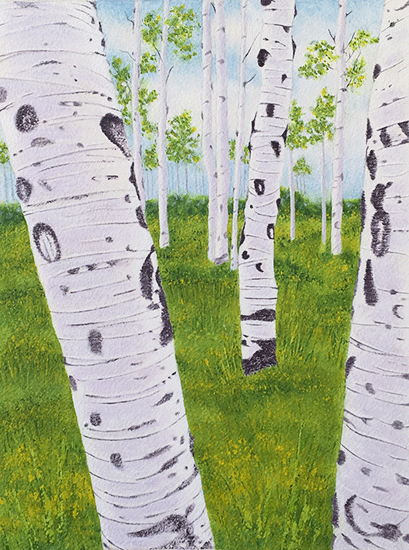 Summer Aspens in process       ©nancgordon2017