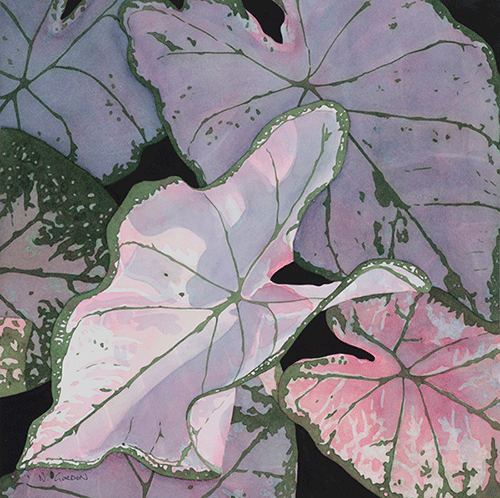 Sun Dappled Caladiums  ©nancgordon All rights reserved
