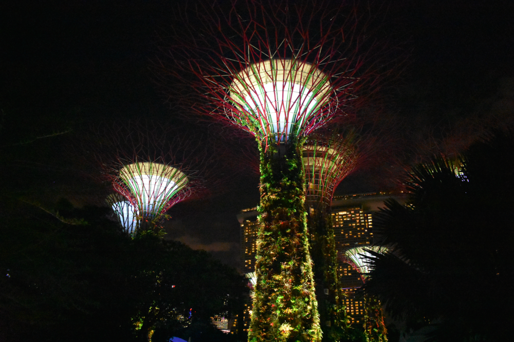 The infamous Supertree Grove at night in downtown Singapore