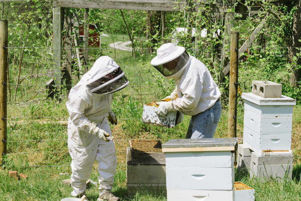 Moving the entire box to the new hive location. We were nervous the queen was going to fall off because she was on the very bottom of the bottom box! This picture also gives you a sense of how many bees are flying around- just look at my mom!