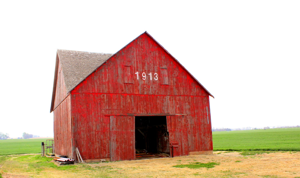 One of my favorite places as a child. I spent hours in the hayloft building haybale forts (much to my dad's chagrin - guess who had to move the bales back?), attempting to tame wild barn-cat kittens, and caring for my beloved horse.