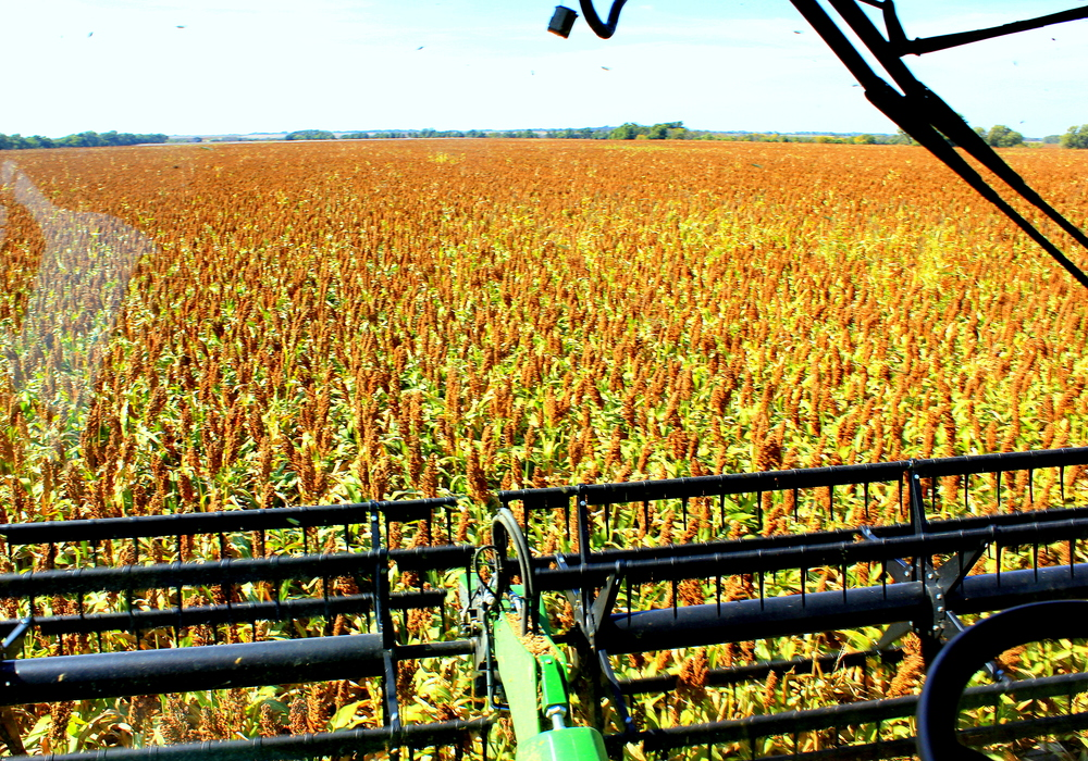View from the cab of the combine