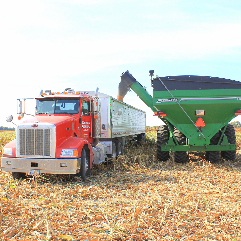 Another view of filling the semi with milo from the grain cart