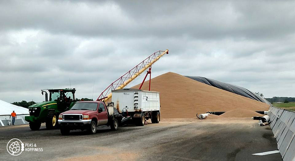 More piles of surplus grain - too much to fit in the grain elevators