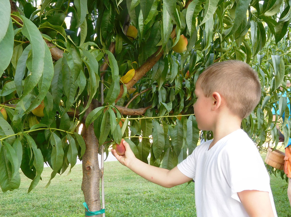 Get the kids involved! Community-based agriculture is a great way to teach children (and adults!) where their food comes from