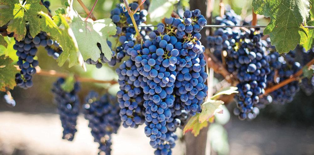 Vineyards-Wine-Tasting-2.jpg