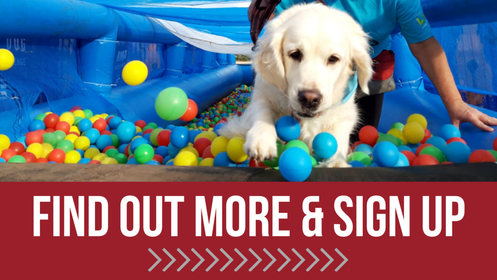 Find Out More & Sign Up Muddy Dog Challenge.png