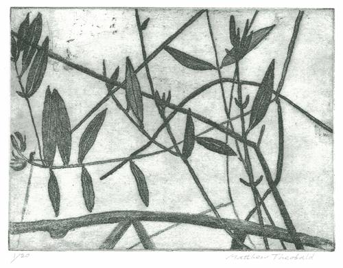 3 © Matthew Theobald - Olive Tree