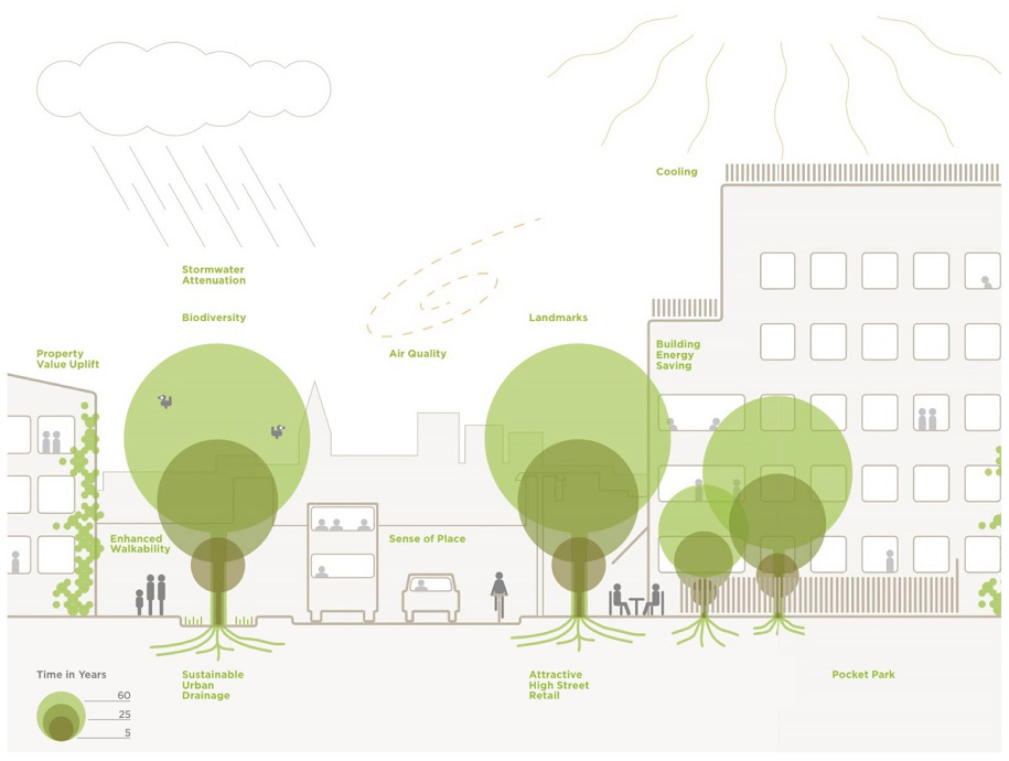 The benefits of mature trees by Capita Lovejoy / Trees and Design Action Group, cited in WF Council's Tree Strategy
