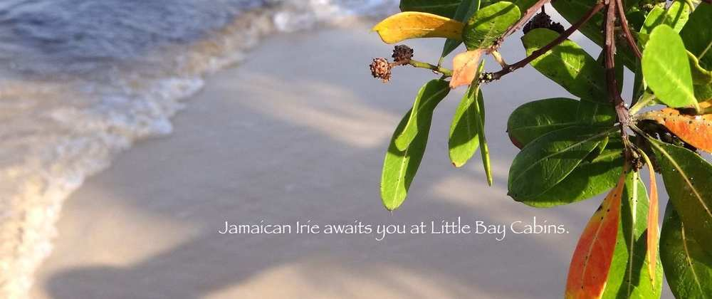 little bay irie.JPG