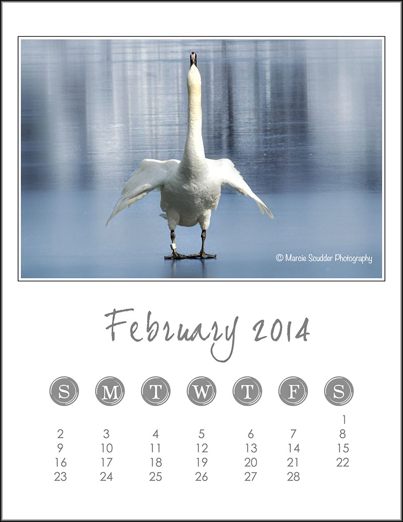 02449pxp.February_Calendar_2014.jpg