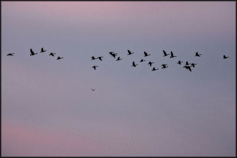 02595pxp.Flying_Free.jpg