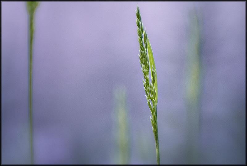 02210pxp.Green_Drishti.jpg