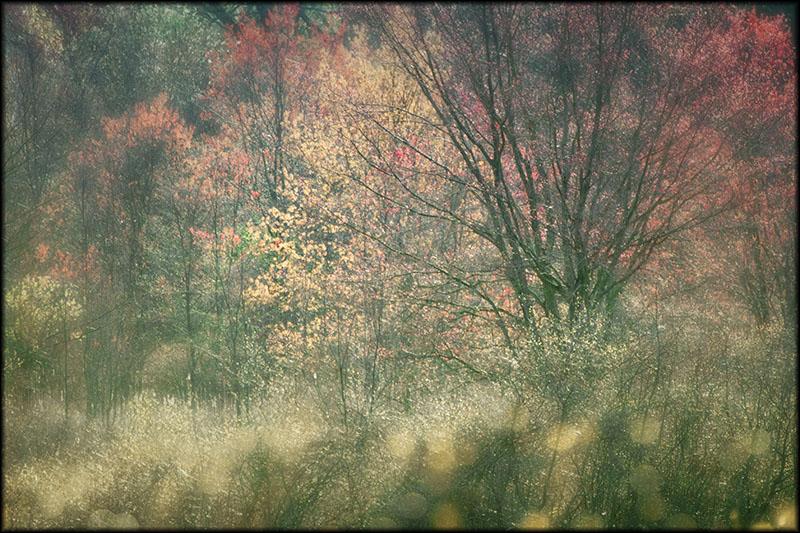 02501pxp.Color_of_Light.jpg